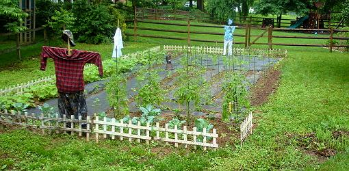 Vegetable Garden Crop Rotation Made Easy Today S Homeowner