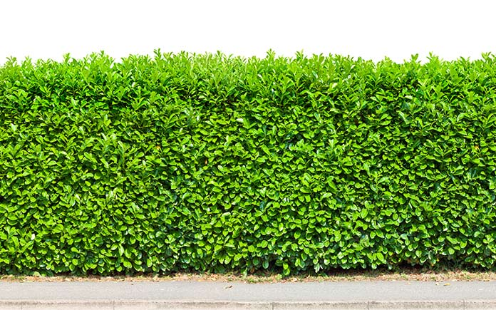 Hedge fencing