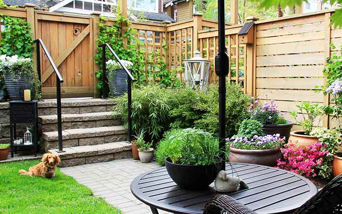 Small garden, fenced in, with dog in backyard