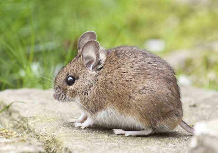 Pest & Rodent Removal in New Castle County, DE