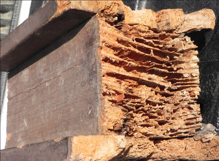 King of Prussia, PA Termite Damage