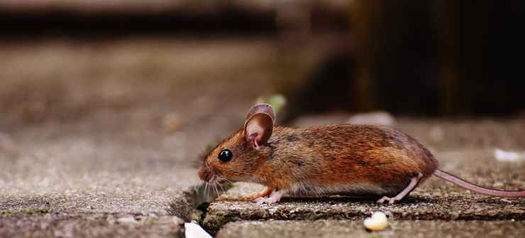Pest & Rodent Removal in Newtown Square, PA