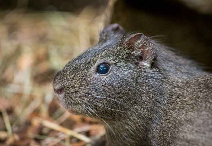 Pest & Rodent Removal in Wilmington, DE