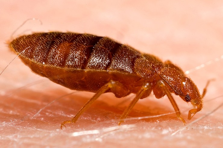 Bed Bug Removal in Wilmington, PA