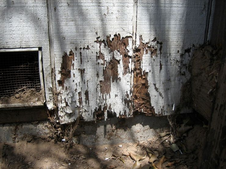 Chester County, PA Termite Damage