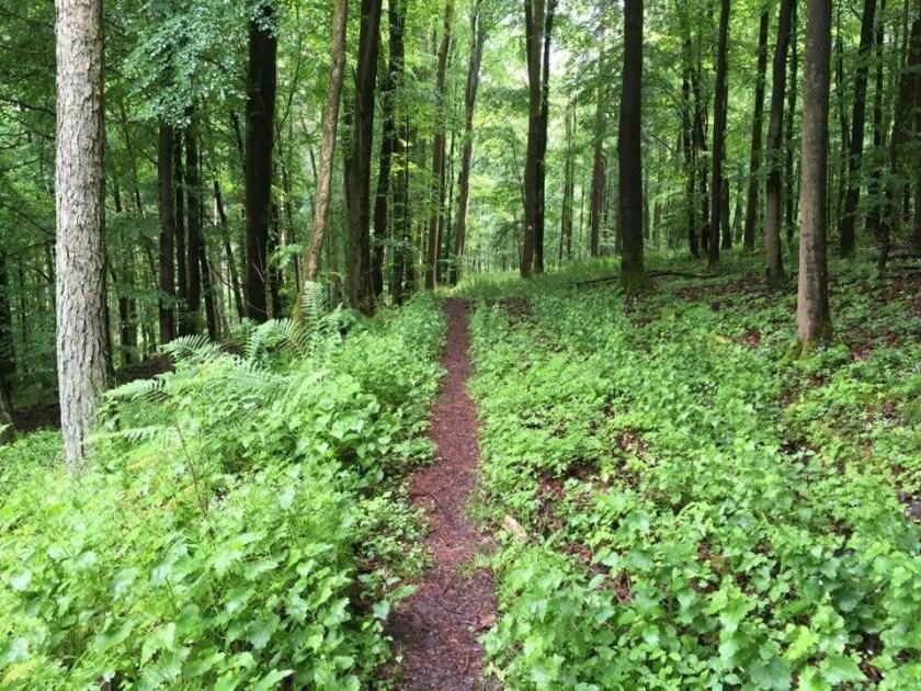 Spessart: Wald bei Schlüchtern