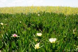 Wildblumenwiese.