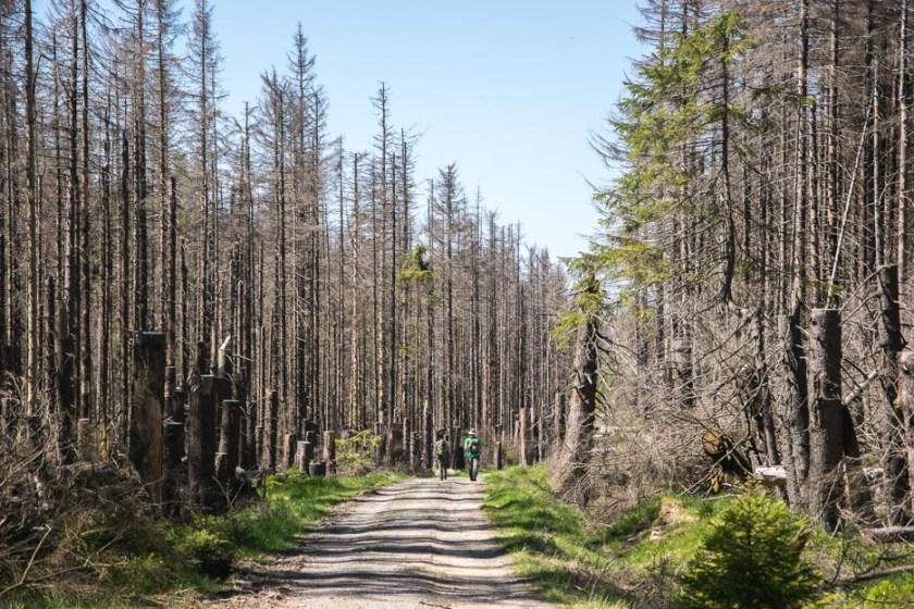 Toter Wald Harz Brockenwanderung Schierke