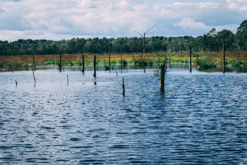 Pietzmoor Lüneburger Heide Ausflug Tipps Wandern
