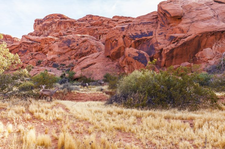 042 Valley of Fire