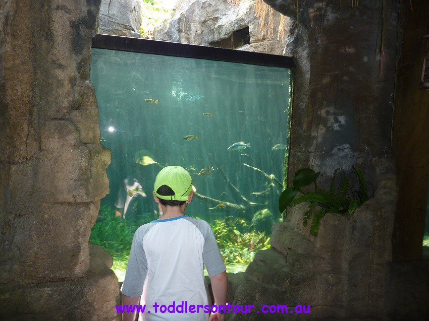 bali safari and marine park review