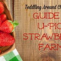 Guide to U-Pick Strawberry Farms 2015