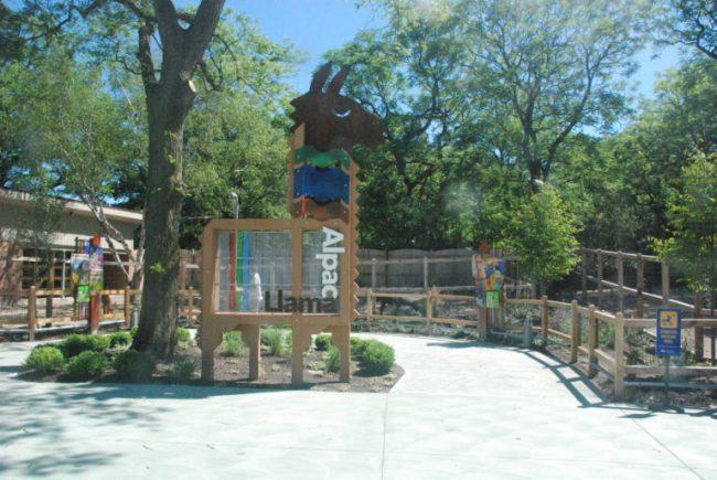 Wild Encounters at Brookfield Zoo - alpacas