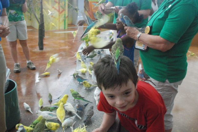 Wild Encounters at Brookfield Zoo - parakeet on Cooper's head