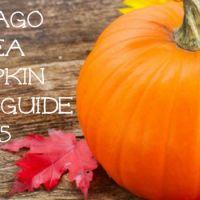 Chicago Area Pumpkin Patch Guide – 2015