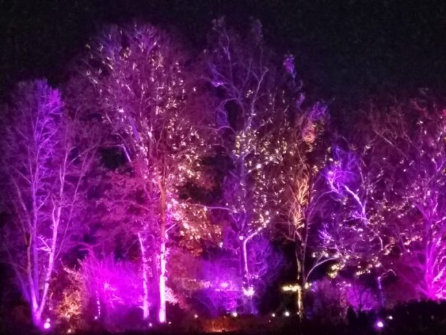 Illumination at the Morton Arboretum - pink trees