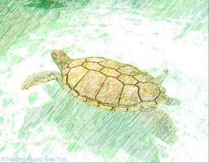 Grand Cayman's Turtle Farm