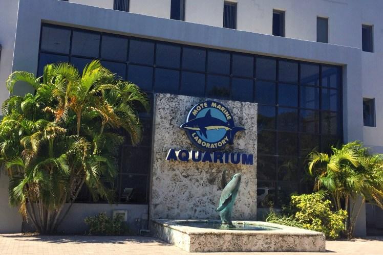 Mote Aquarium Fun for Kids in Sarasota