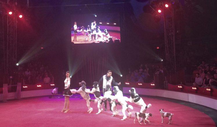 Circus Sarasota Hans Klose Canines