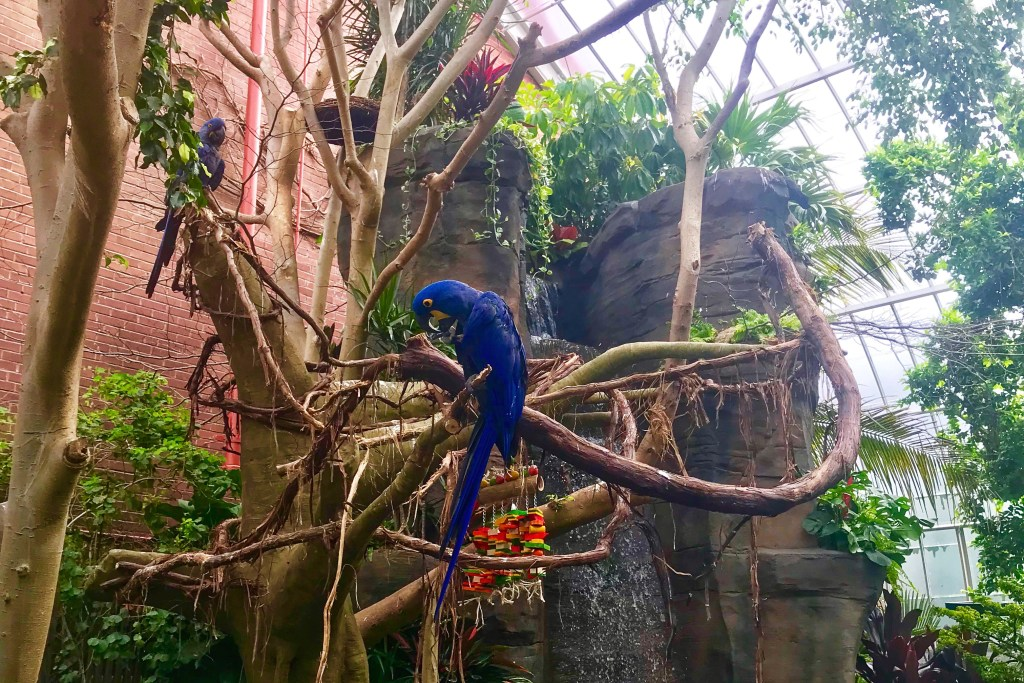 Things to do in Pittsburgh with kids National Aviary Tropical Rainforest Toddling Traveler