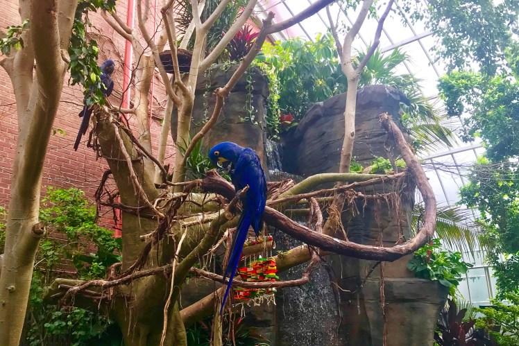 Pittsburgh National Aviary Tropical Rainforest