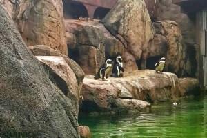 Pittsburgh penguins national aviary
