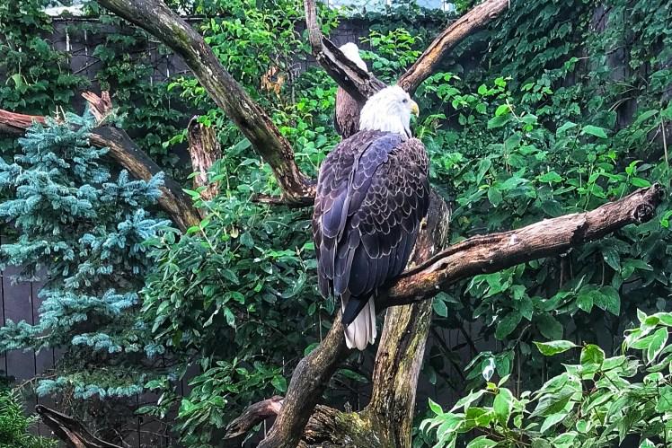 Pittsburgh National Aviary Birds