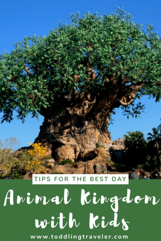 Pinterest Animal Kingdom with Kids Toddling Traveler