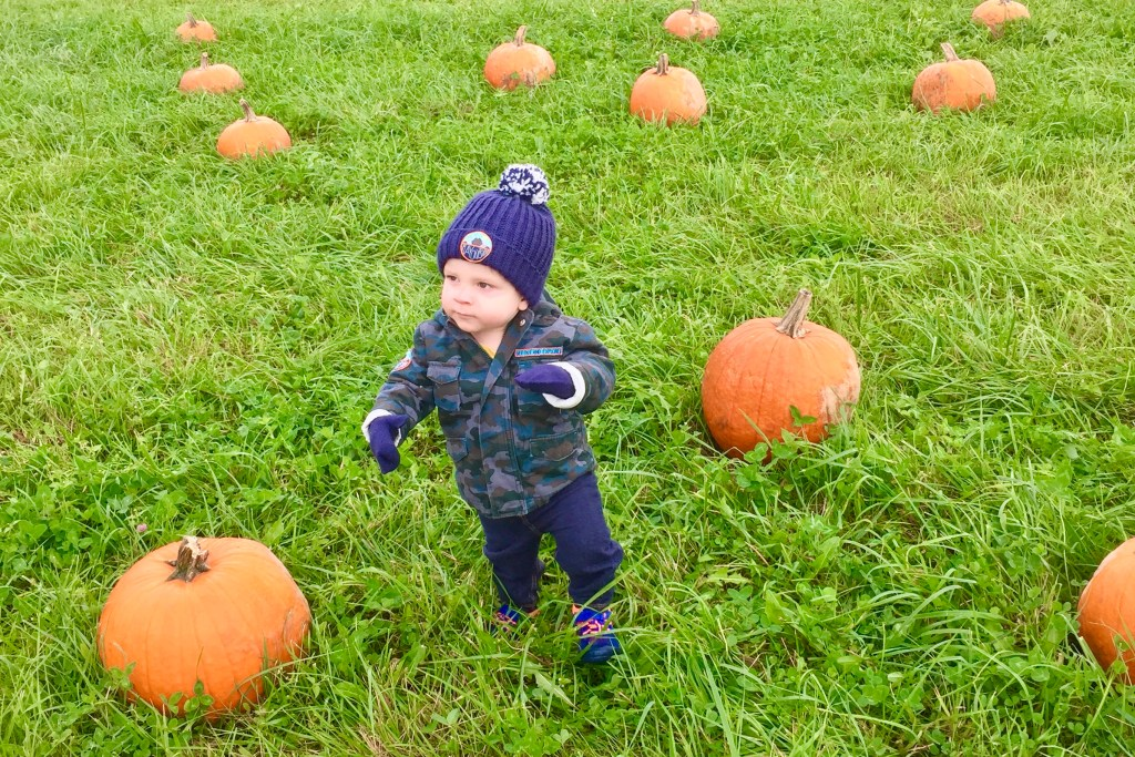 Pumpkin Patches in Pittsburgh Freedom Farms Fall Festival Toddling Traveler