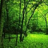 zöld az erdő