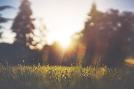 morning sun on the grass