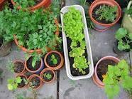 Pot Gardening