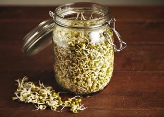 how to grow bean sprouts in a jar