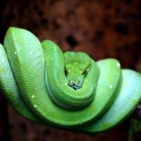 Love the Snake