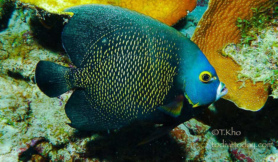 Buddy Dive resort, Dive Boneaire