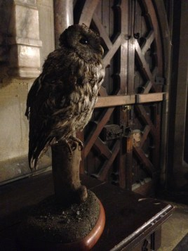 resident-owl-can-you-spot-him-in-the-church