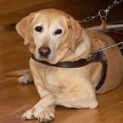 Entrenan perros que ayudan a personas con Alzheimer Neurología