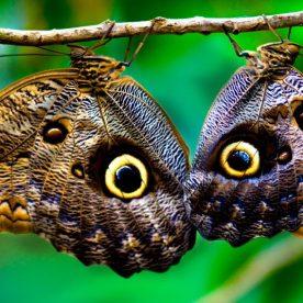 clases-de-mariposas