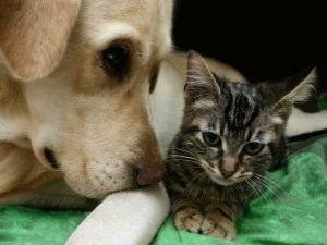 Trucos para una mejor relación con tu perro y su nutrición