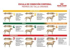 Escala de condición corporal_Perro grande_Royal Canin