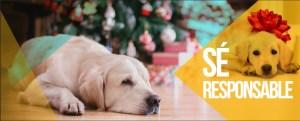 Reflexiona antes de regalar seres vivos esta Navidad