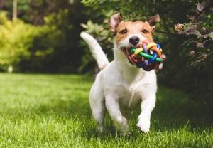 ¿Mi perro es feliz? Descúbrelo con estas señales