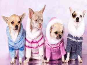 ¿Es bueno ponerle ropa a los perros?