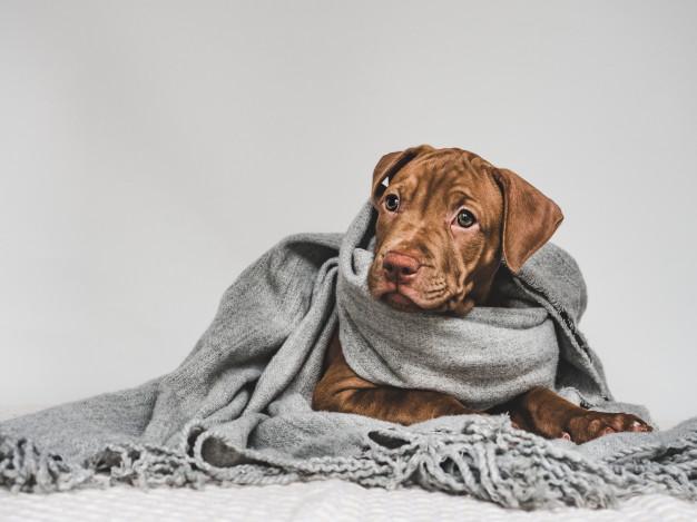 Cuídalos en el frío de enero y febrero