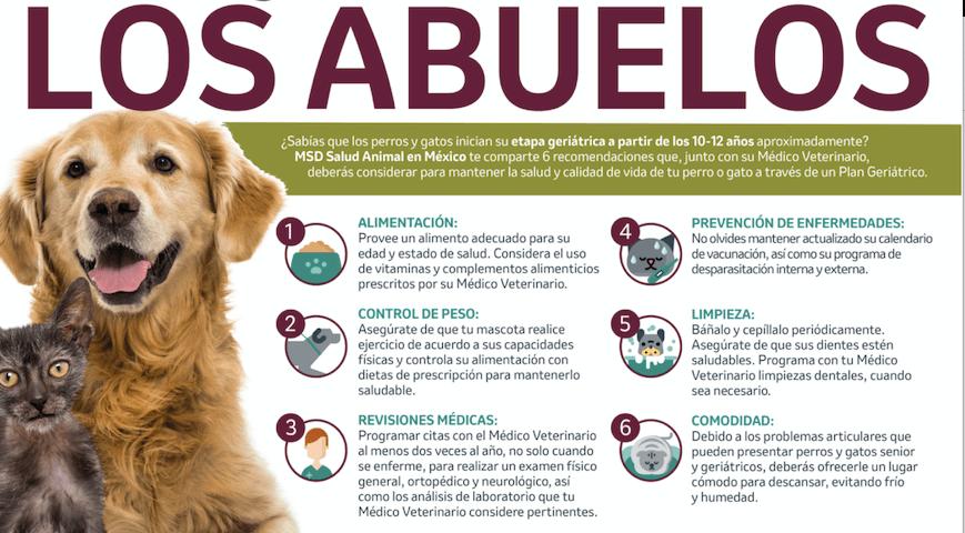 animales geriátricos abuelitos