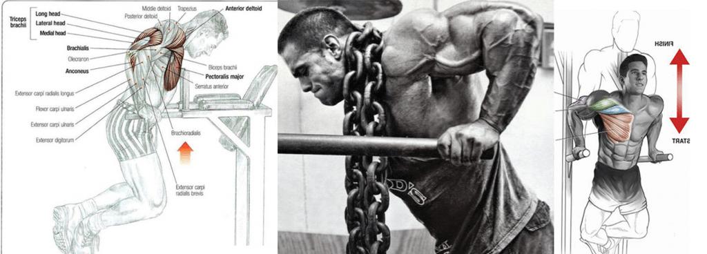 fondos musculos