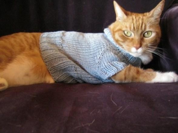 onde-comprar-roupa-frio-gato-2