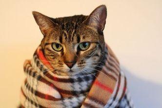 onde-comprar-roupa-frio-gato-3