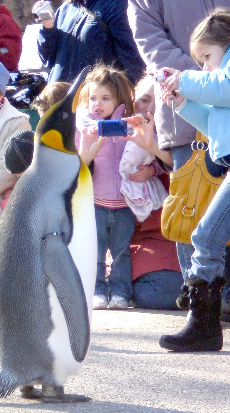 A los niños les gustan los pingüinos: Club Penguin, Habbo y otras ...