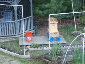 Setting up a bee hive